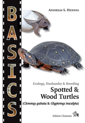Spotted Turtle and North American Wood Turtle   Dodax.pl
