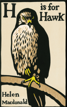 H is for Hawk | Dodax.pl