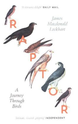 Raptor | Dodax.at
