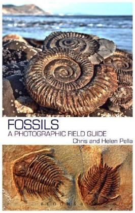 Fossils | Dodax.at