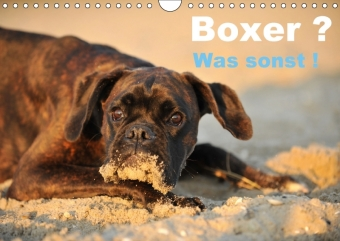 Boxer ? Was sonst ! (Wandkalender 2017 DIN A4 quer) | Dodax.at