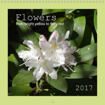 Flowers from bright yellow to fiery red (Wall Calendar 2017 300 × 300 mm Square) | Dodax.at