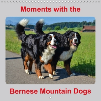 Moments with the Bernese Mountain Dogs (Wall Calendar 2017 300 × 300 mm Square) | Dodax.ch