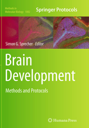 Brain Development | Dodax.ch