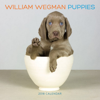 William Wegman Puppies 2018 | Dodax.com