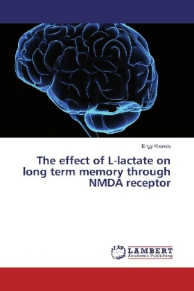 The effect of L-lactate on long term memory through NMDA receptor | Dodax.pl