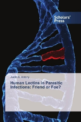 Human Lectins in Parasitic Infections: Friend or Foe? | Dodax.pl