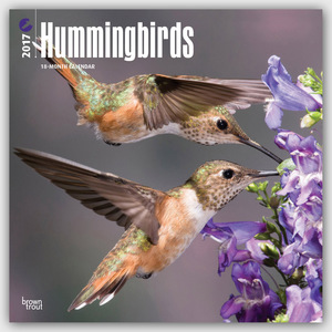 Hummingbirds - Kolibris 2017 - 18-Monatskalender | Dodax.at