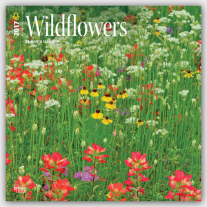 Wildflowers - Wildblumen 2017 - 18-Monatskalender | Dodax.at