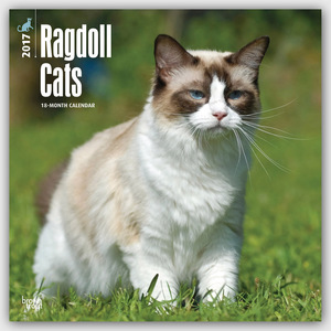 Ragdoll Cats 2017 | Dodax.at