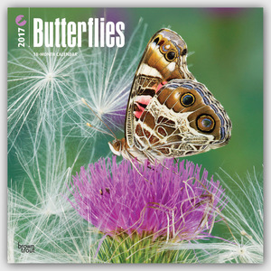 Butterflies - Schmetterlinge 2017 - 18-Monatskalender | Dodax.at
