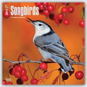 Songbirds - Singvögel 2017 - 18-Monatskalender | Dodax.at