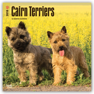 Cairn Terriers 2018 | Dodax.at