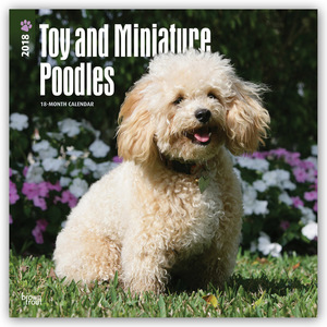 Toy and Miniature Poodles 2018 | Dodax.at