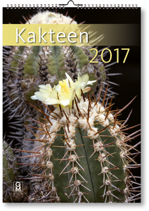 Kakteen 2017 | Dodax.at