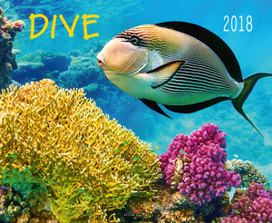 Dive 2018 | Dodax.co.uk
