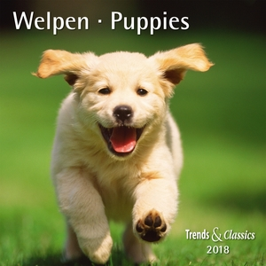 Welpen / Puppies 2018 | Dodax.at