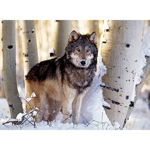 Puzzle Wolf 1500 teilig | Dodax.at