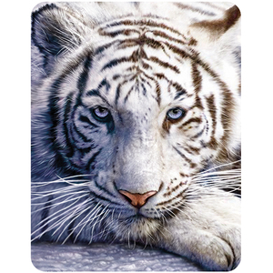 3D Magnet White Tiger Repose | Dodax.ch